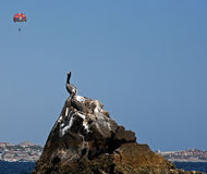 Pelican perched on rock in Cabo San Lucas harbor near Los Arcos (Lands End) in Baja Mexico with parasailor (parasai Stock Photo