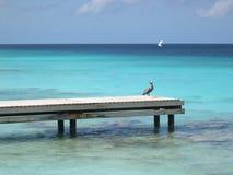 Pelican on pier. Pelican on old wooden pier in Bonaire Stock Photography