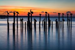 Pelican and Pier Piling Sunset Silhouettes. Sunset silhouettes of pelicans on old pier pilings in Destin Harbor, Florida, USA Royalty Free Stock Photography