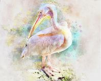 Pelican, Pink, Bird, Nature, Beak Royalty Free Stock Photos