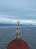 Pelican@port Stock Photography