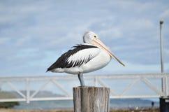Pelican post Stock Photos
