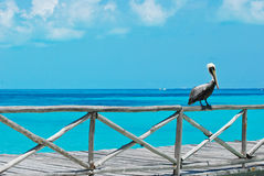 Pelican on railing by ocean. Pelican perched on wood dock railing by the blue ocean Stock Image
