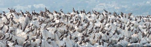 Pelican Rock in San Mateo County, California Royalty Free Stock Image