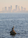 Pelican on rock in Tampa Bay Royalty Free Stock Photography