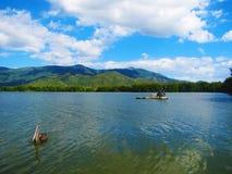 The pelican's lake. A pelican taken in a lake in Cuba Royalty Free Stock Photo