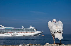 Pelican by the sea, against of a cruise liner Royalty Free Stock Photos