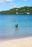 Pelican on a sea surface of Magens Bay beach on St Thomas Island, US VI. Royalty Free Stock Photography