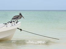 Pelican and seagulls on boat in ocean Stock Image