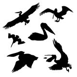 Pelican set vector. Pelican set of black silhouettes. Icons and illustrations of animals. Wild animals pattern stock illustration