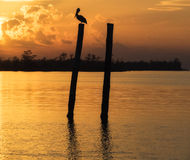 Pelican Silhouette at Sunset Royalty Free Stock Images