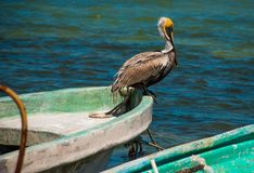 Pelican sitting on a boat. View of old boats in the ocean in Rio Lagartos, Mexico Yucatan. Pelican sitting on a boat. View of old boats in the ocean in Rio Stock Photography