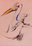 Pelican sketch. Old,grunge original pastel and  hand drawn sketch of a pelican (disambiguation).Free composition Royalty Free Stock Photography
