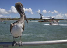 Pelican and Space Shuttle. Large pelican on railing with NASA Space Shuttle on a river barge Stock Photos
