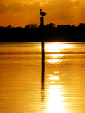 Pelican Sunset 1 Stock Image