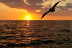Pelican Sunset royalty free stock photos