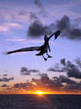 Pelican at sunset stock photography