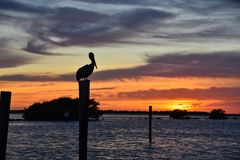 Free Pelican Sunset In Florida Royalty Free Stock Image - 142726526