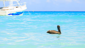Pelican and turquoise caribbean sea Stock Photo
