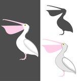 Pelican. Vector illustration (EPS 10 vector illustration
