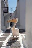 Pelican walking through the street of Chora city. Royalty Free Stock Image