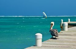 Pelican and Windsurfer Royalty Free Stock Photography