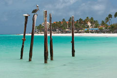 Pelican on wooden posts Stock Images