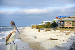 Pelicano em Apalachicola, Florida, EUA foto de stock
