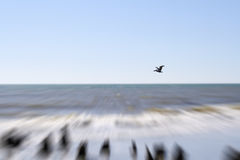 Pelicano em Carolina Beach sul Imagens de Stock Royalty Free