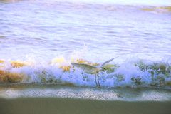 Pelicano na praia Imagens de Stock