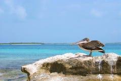 Pelicano na rocha Foto de Stock Royalty Free