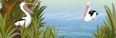 Pelicano no ninho a lagoa com uma árvore coa muitos ramos e uma grama alta ilustração stock