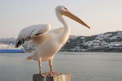 Pelicano Pedro de Mykonos Fotografia de Stock Royalty Free
