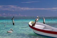 Pelicanos em Isla Holbox Imagens de Stock
