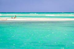Pelicanos na praia de México imagem de stock royalty free