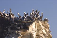 Pelicanos no por do sol Foto de Stock Royalty Free