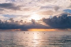 Pelicanos que voam sobre o mar das caraíbas no nascer do sol fotografia de stock