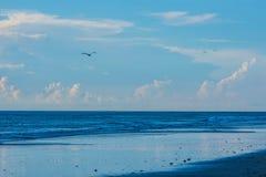 Pelicanos sobre uma praia azul cintilando fotos de stock
