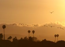 Pelicans At Sunset Stock Photography