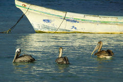 Pelicans by the Boat Royalty Free Stock Images