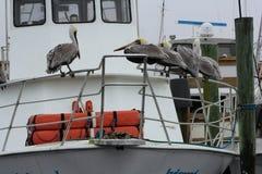 Pelicans. On a boat rail in Destin Florida stock photos