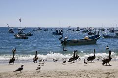 Pelicans and Boats, Mexico Royalty Free Stock Image