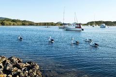 Pelicans and boats stock photo