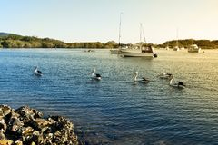 Pelicans and boats on Myall Lake. In Australia Royalty Free Stock Photo