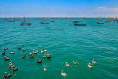 Pelicans and boats Stock Image