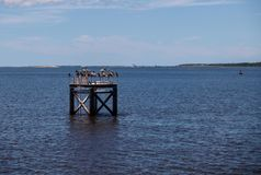 Pelicans on Channel Marker. A group of pelicans rest on a channel marker in the Cape Fear River near Fort Fisher, North Carolina stock photography