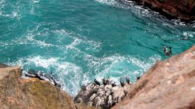 Pelicans on cliffs. With the sea Stock Photo