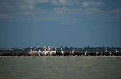 Pelicans and cormorants in the mouth of the Danube, where the river flows into the Black Sea against a blue sky with white clouds stock image