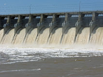 Pelicans fishing below the dam. Pelicans fishing in the current and foam below the dam spillway stock photo