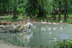 Pelicans and flamingos at the pond with nameplate stock photo
